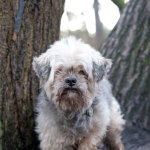 Muttley at Coombe Abbey 2010