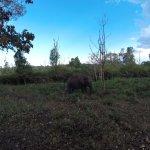 Elephant on safari!