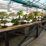 Well arranged and wonderfully well kept and treated bonsai of many different species of trees.