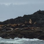 Sea Lions hanging out on the rocks
