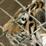 St. Louis Zoo Foto