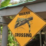 Foto de The Green Iguana Hotel