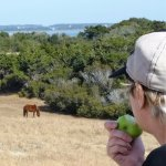 From a distance, watching a wild horse graze and checking me out while I gazed and checked it ou