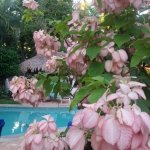 Lots of blooming trees by the pool!