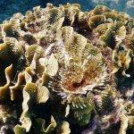 Foto de TGI Diving International - Roatan Henry Morgan