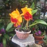 Photo de Jardin Botanico Lankester