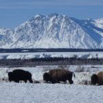 Photo de Jackson Hole Eco Tour Adventures