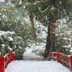 Foto di Kubota Garden