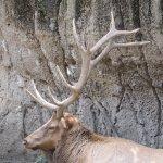 Photo of Parque Zoologico de Chapultepec