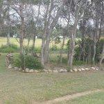 Kangaroos on the edge of the caravan park