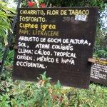 Foto de Vivero y Cafe de la Escalonia