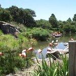 El lago y sus flamencos