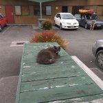 Photo de Waitomo Lodge