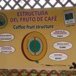 Photo of Doka Estate Coffee Tour
