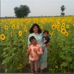 Sunflower fields on the way to Badami