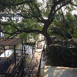 Photo of Bangkok Tree House