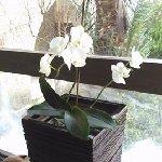 Ayii Anargyri Natural Healing Spa Foto