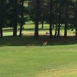 Foto de Kangaroo Valley Golf & Country Resort