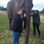 Bilde fra Knysna Elephant Park Lodge