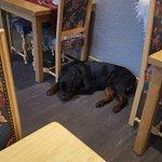 Assez surpris par le chien du proprietaire ( trés gentil)