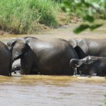 Elephants in river below the bar/dining area