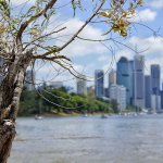 Brisbane river walk and kangaroo lookout