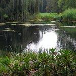 Der Teich im Schlosspark