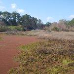 Cypress wetlands 6