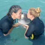 Dolphin Connection - Inspiring Conservation Every Day!