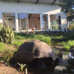 Enjoying our daily yoga with a resident tortoise.