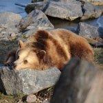 Un des ours du parc