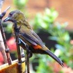Bird feeder at breakfast
