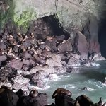 Sea Lion Caves Foto