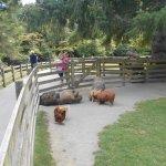 Photo de Paradise Valley Springs Wildlife Park