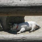 kid sleeping in the shade