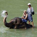 Foto de Elephant Village Sanctuary Day Trips