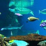 Amazing Day at the Aquarium
