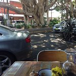 Lovely setting out the front under the shady fig trees
