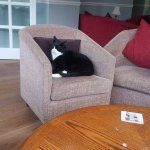 resident cat Mr bains .. quite a character .