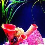 Aquarium display