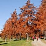 Herbst beim Wandern in Mölten