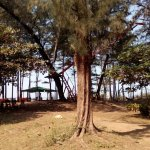 Lotus Beach Resort, Murud-Dapoli Photo