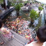 Fishes in the pool below the entrance