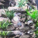 More of the aquarium