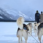 Snowy Owl Dog Sled Tours