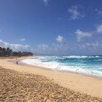 Hawaii Turtle Tours Foto