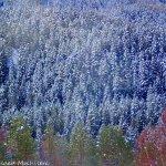 Así de veían los árboles tras la nevada que hubo unos días antes.