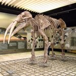 Photo de Senckenberg Natural History Museum (Naturmuseum Senckenberg)