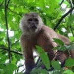 Photo de Monte Amazonico Lodge