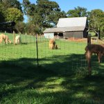 Pacabella Farm Alpacas & Boutique